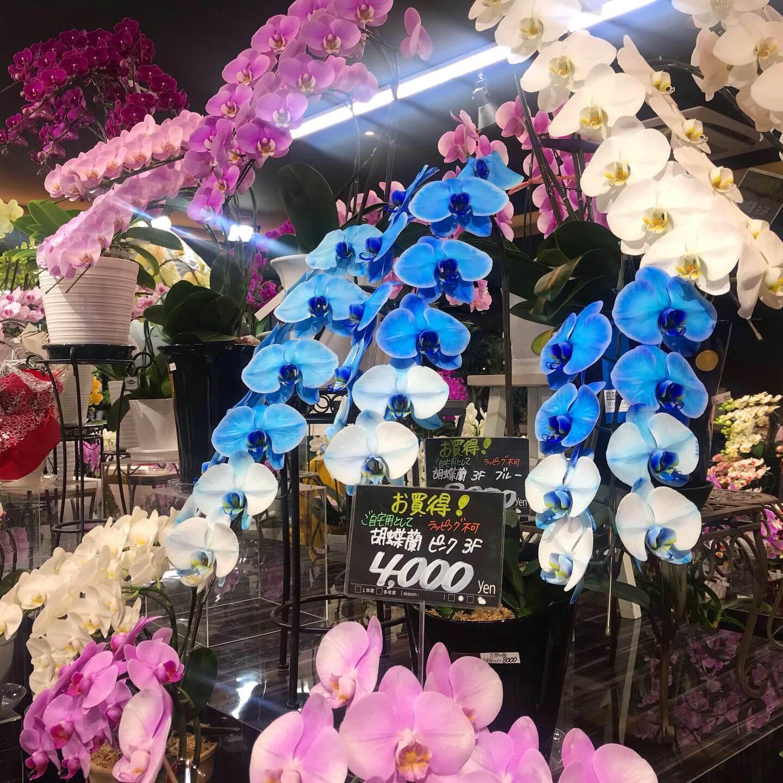写真:エフェクトの花