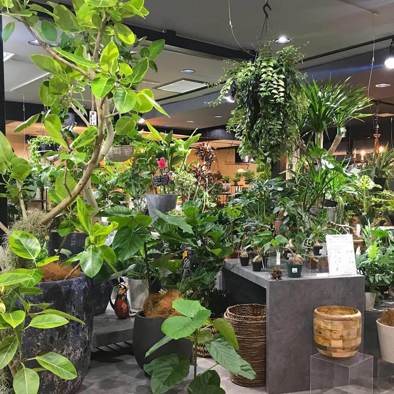 写真:エフェクトの植物