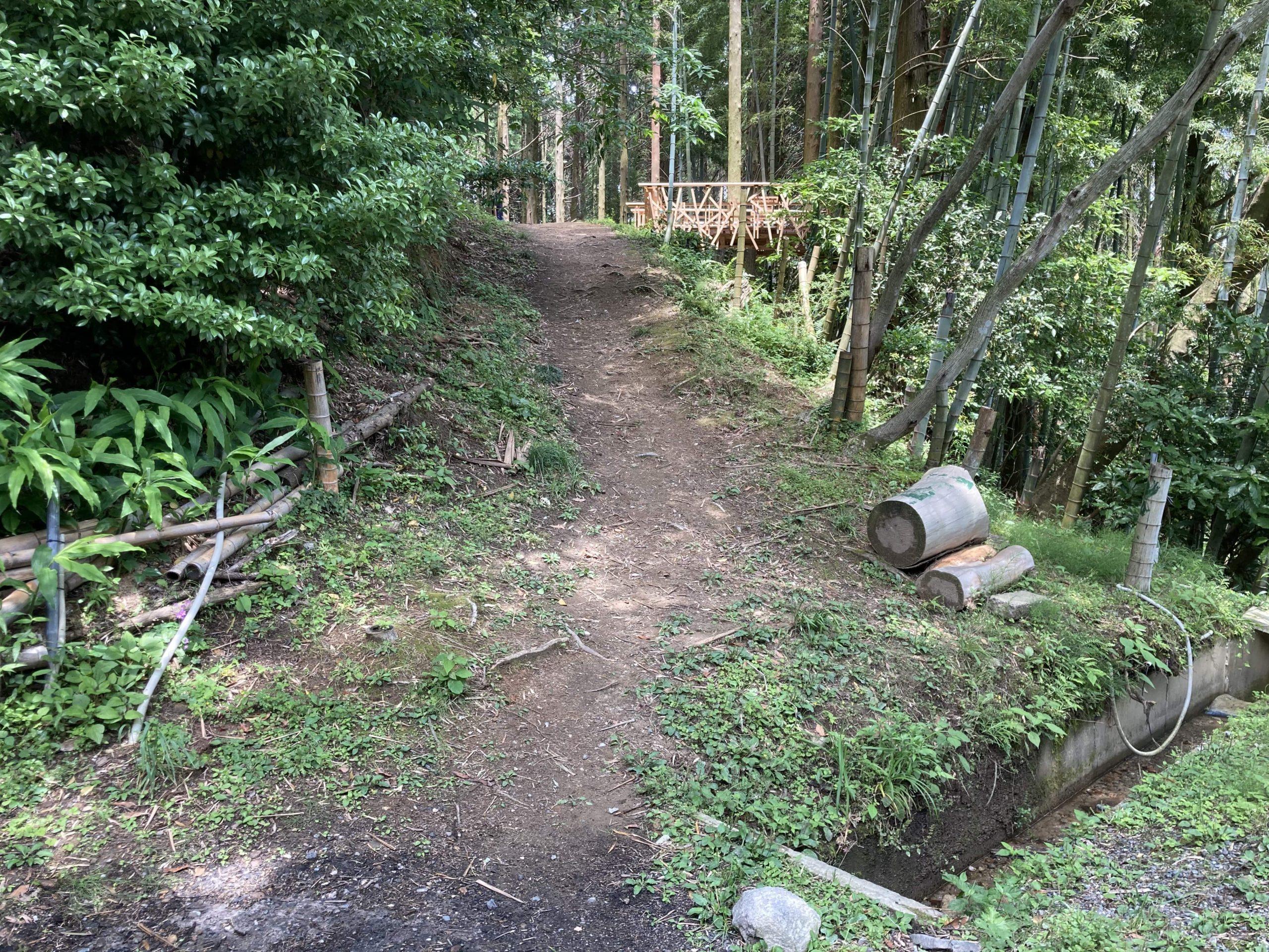 写真:森の中にある小道